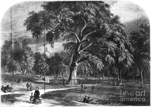 boston-common-great-elm-granger